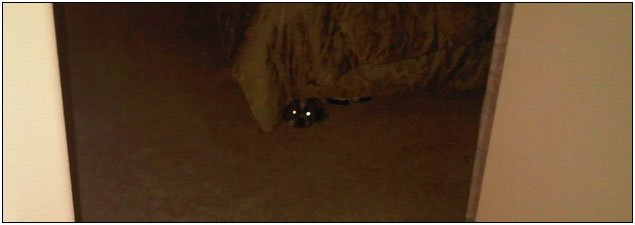 Furry Critter Hiding Under Our Bed